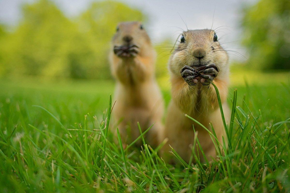 Очень смешная картинка животного