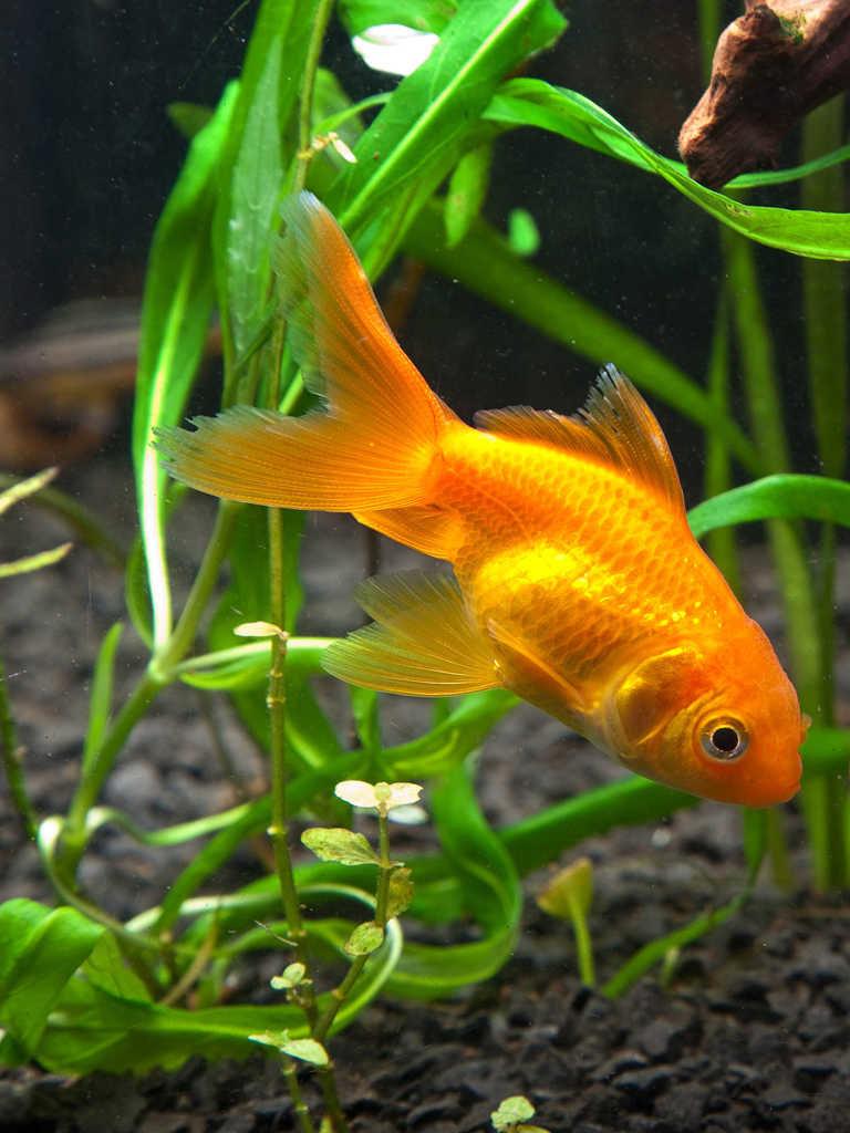 марковна аквариумные рыбки картинки на телефон вакуумной