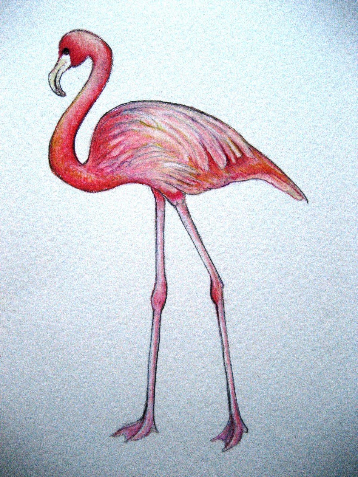 Картинки фламинго красивые для срисовки