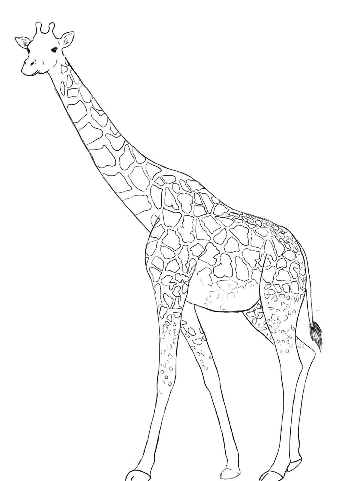картинки для рисования жирафа этого