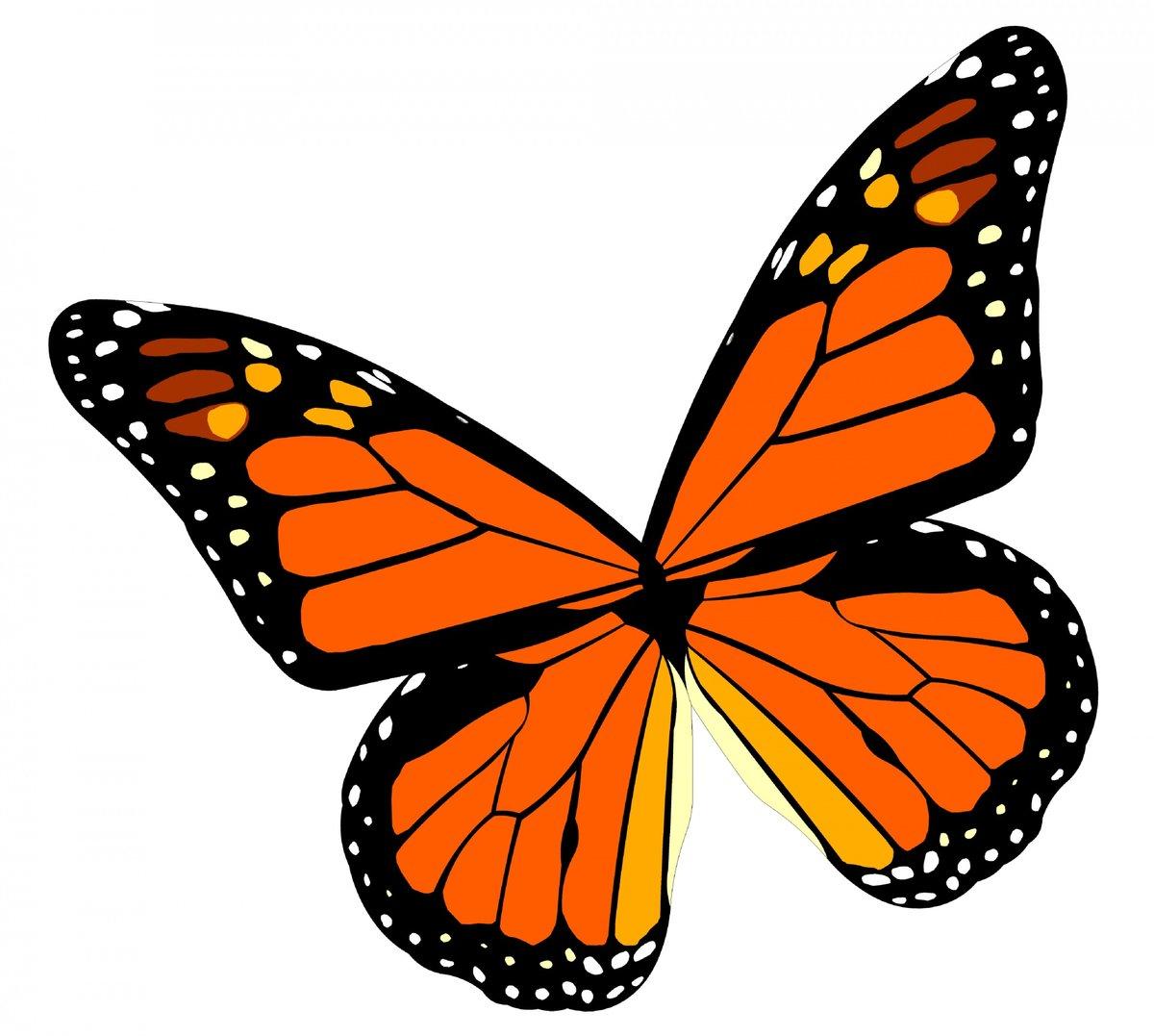 Рисунки картинки бабочек