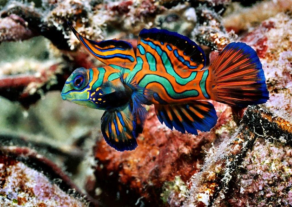 для тату названия и фото океанских рыб украсьте стены мансарды