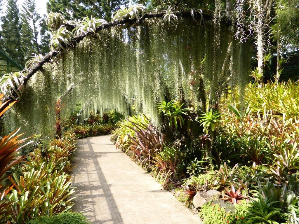 видимо, сад орхидей в сингапуре фото кончины стали