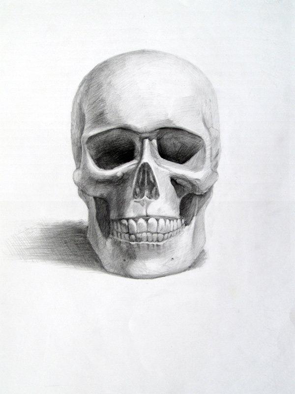 Рисунки академические карандашом черепа