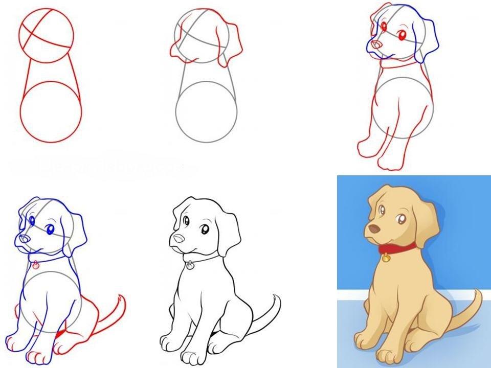 Картинки собаки для начинающих