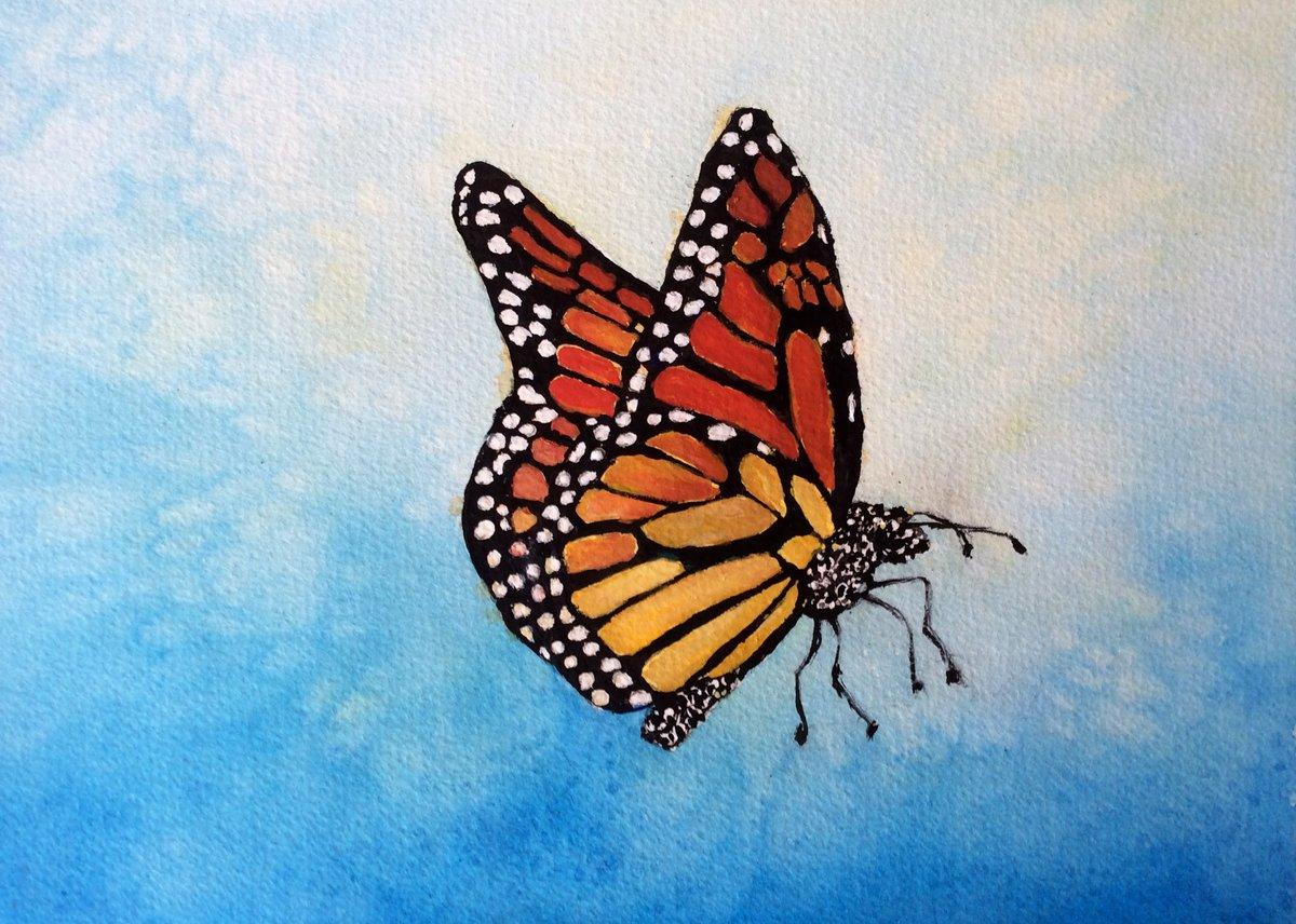 Картинки бабочек легких
