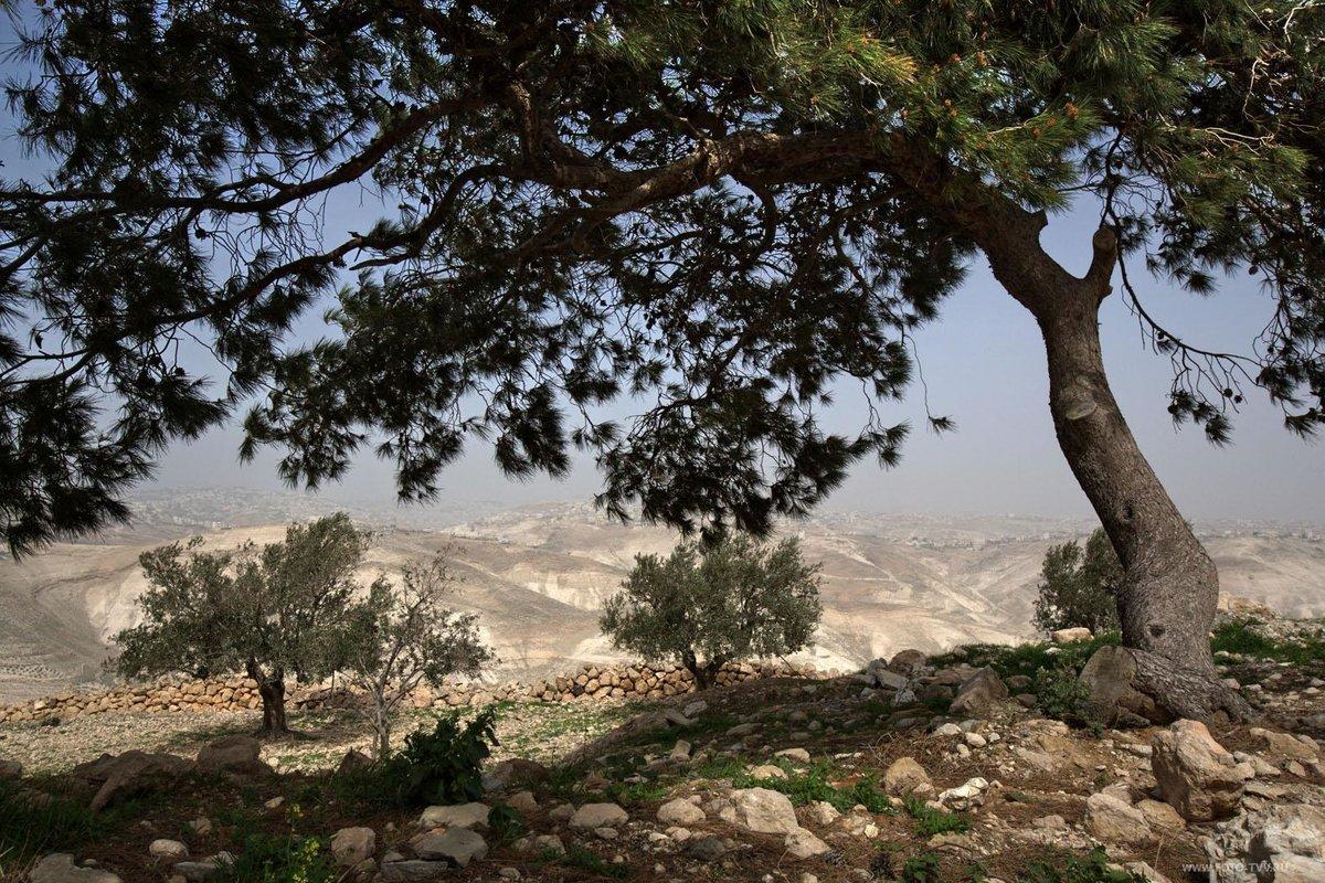 природа израиля фотографии паленья являются