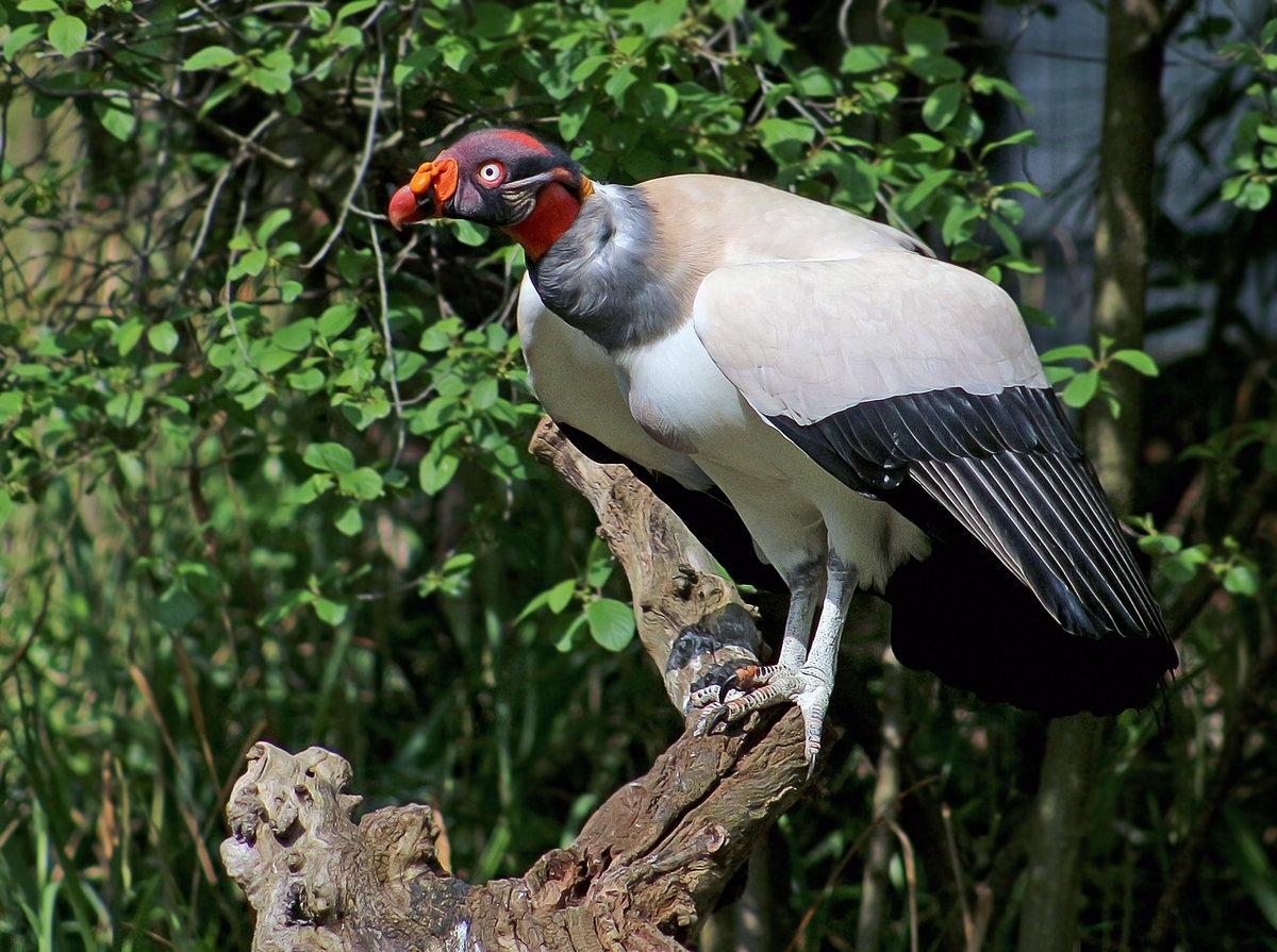 фото животных южной америки или