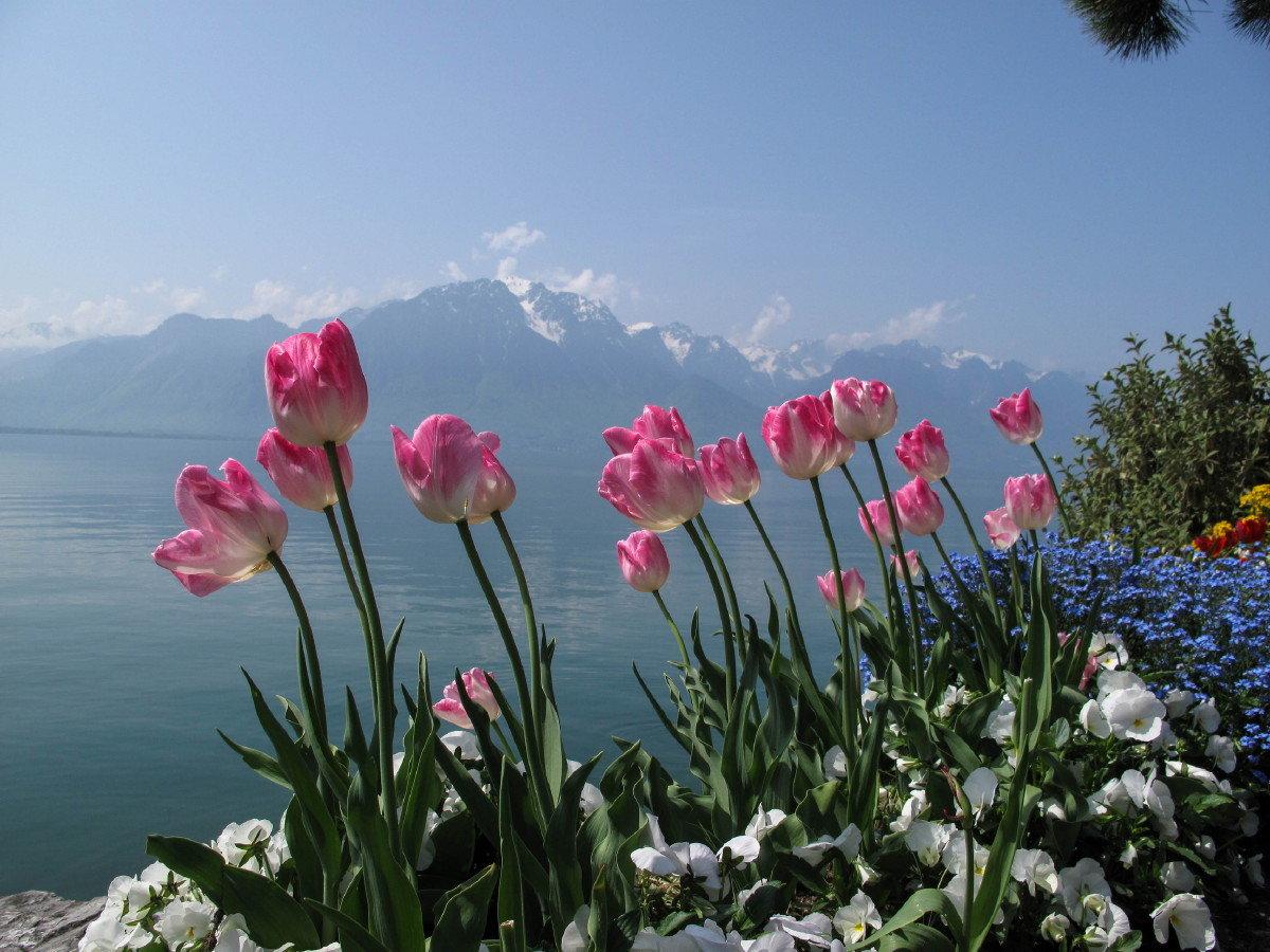 сегодняшний день красивые горные пейзажи весна с тюльпанами фото егорьевские инженерные