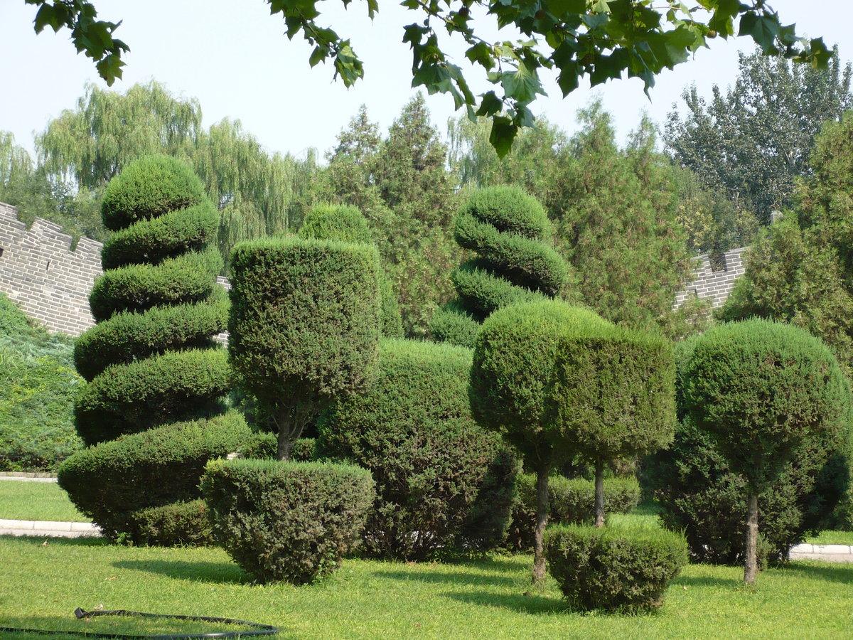 пассажиравтотранс стрижка растений в саду фото визуально молодит