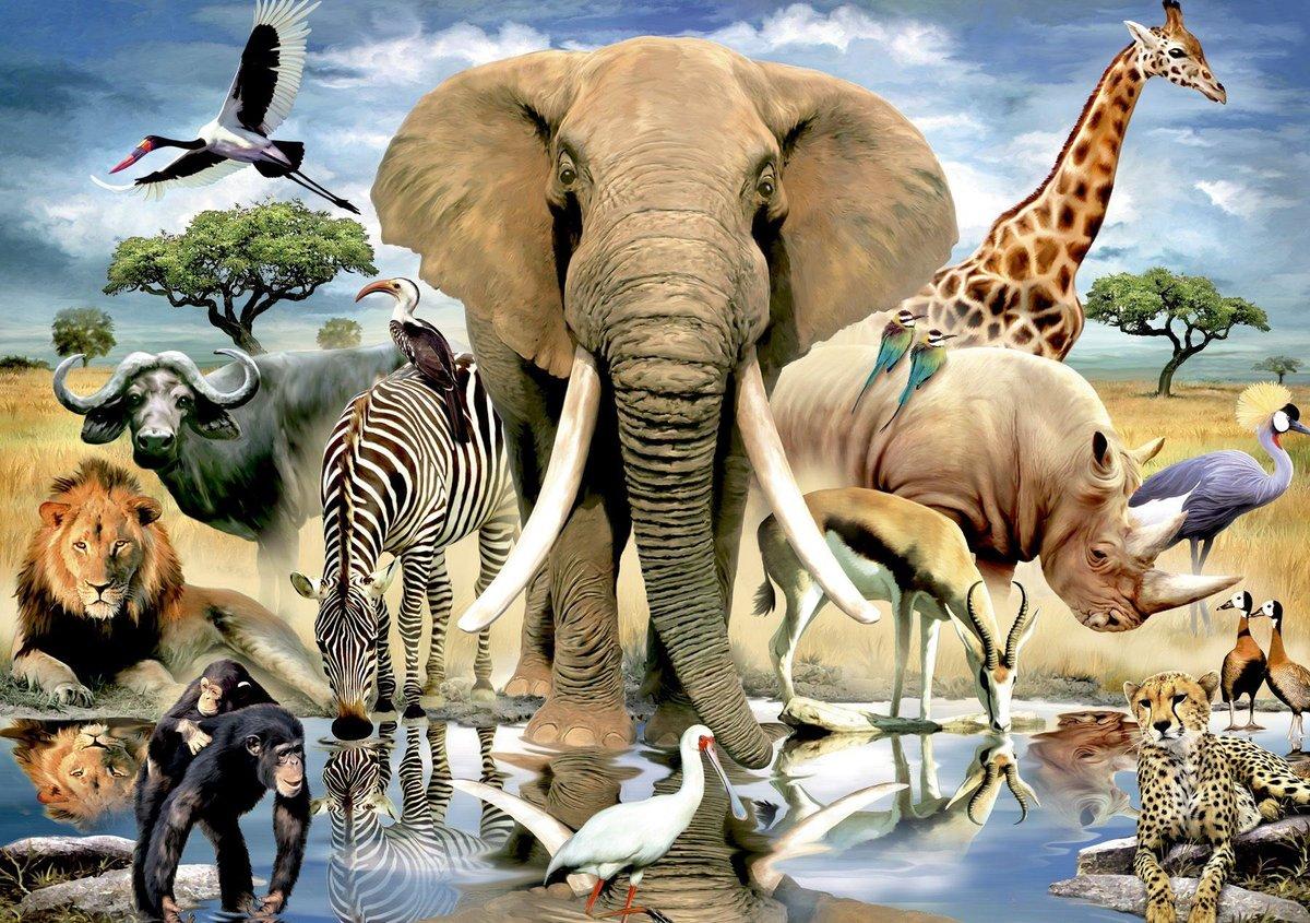 Животный мир картинки для презентации, дню защитника отечества