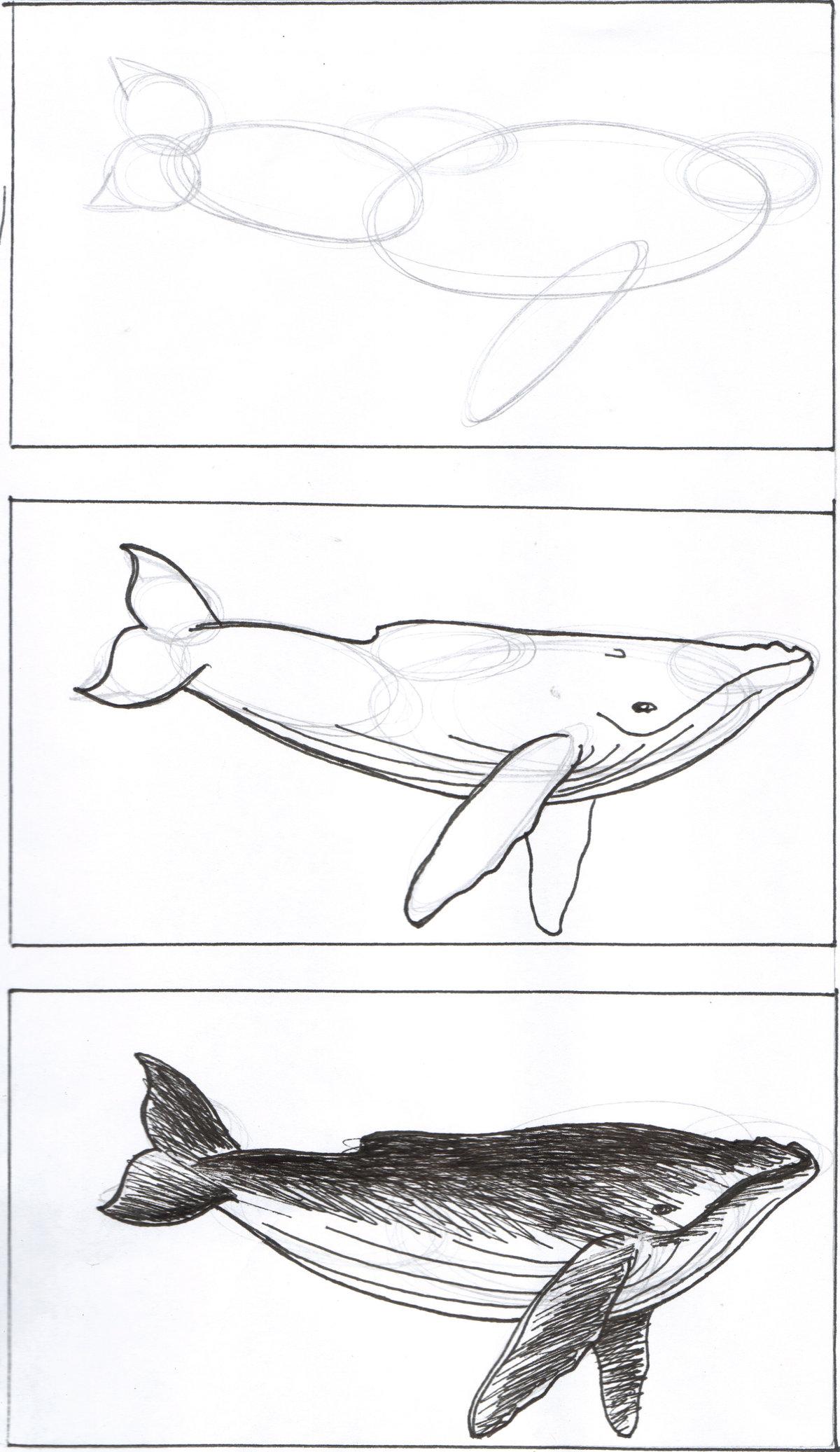 синий кит рисунок карандашом поэтапно один