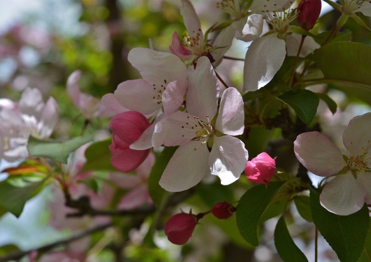 Картинки май весна