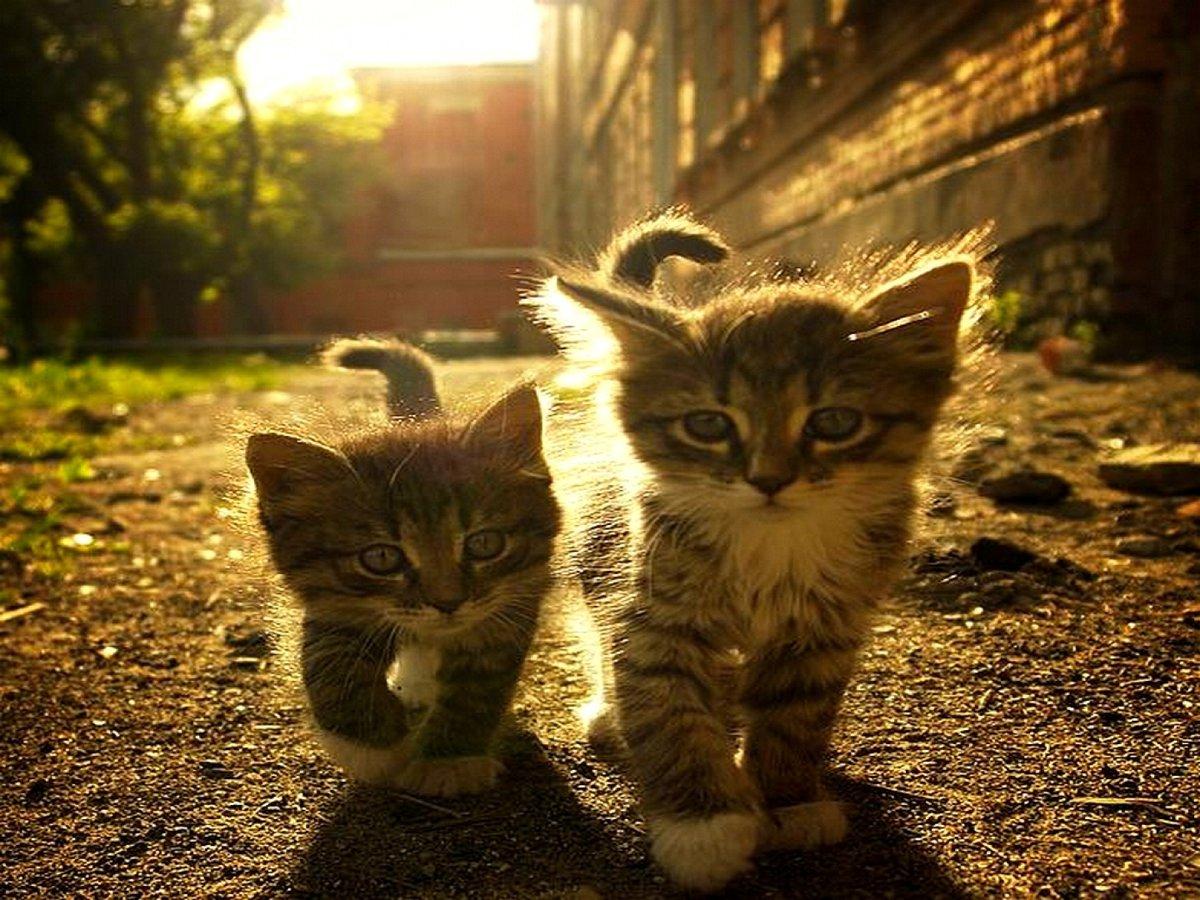 Картинки приколы с котами и котятами, супермаркете