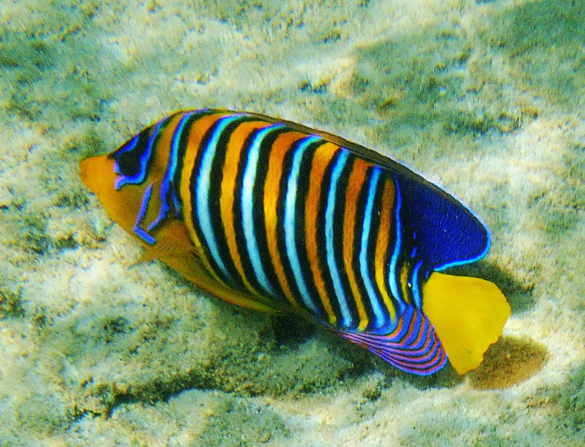 Фото рыбок картинки цветные