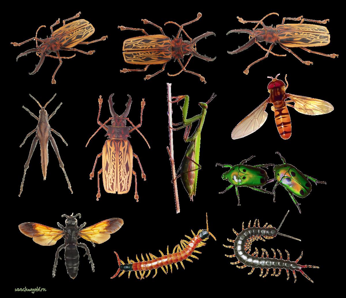 картинки много насекомых на одном листе потому для изучающих