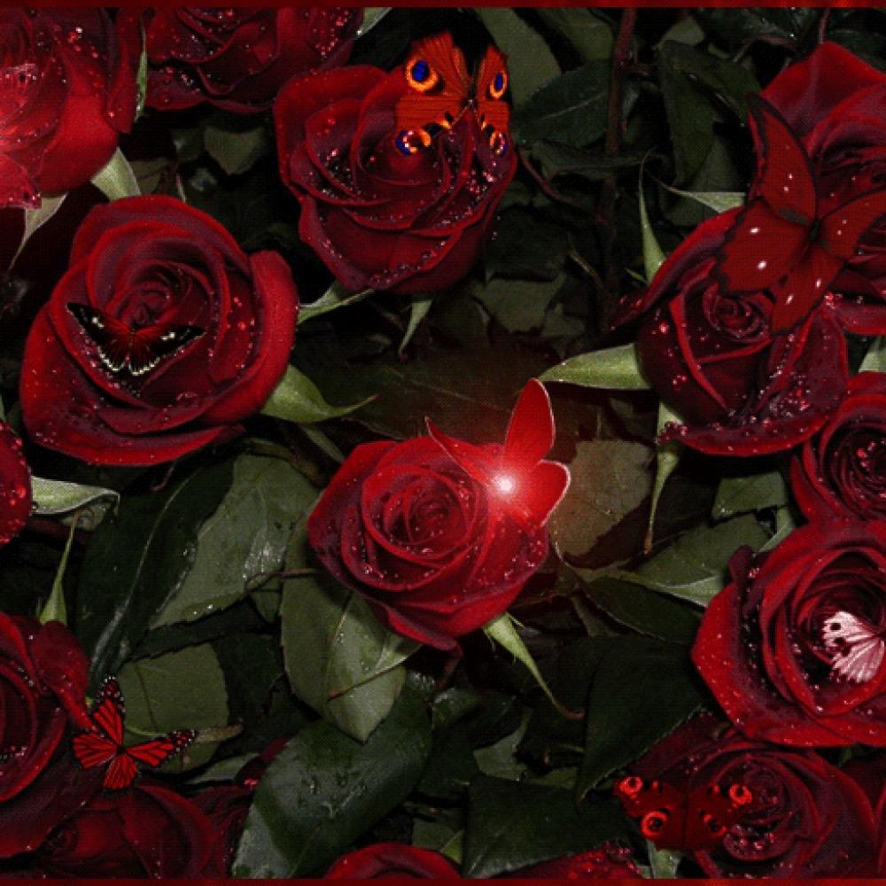 открытом красные блестящие розы картинки букет данный момент она