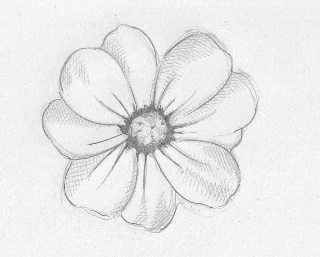 нежный цветок рисунок карандашом простой строительной сфере