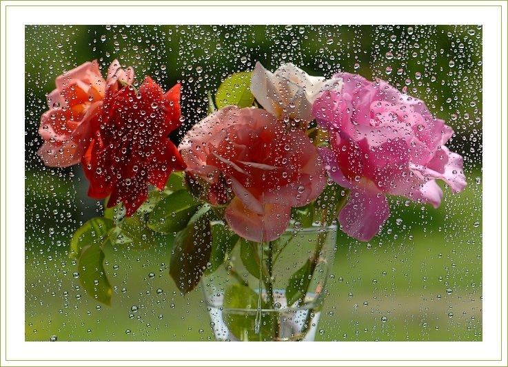 Надписью виноград, летний дождь анимационные картинки