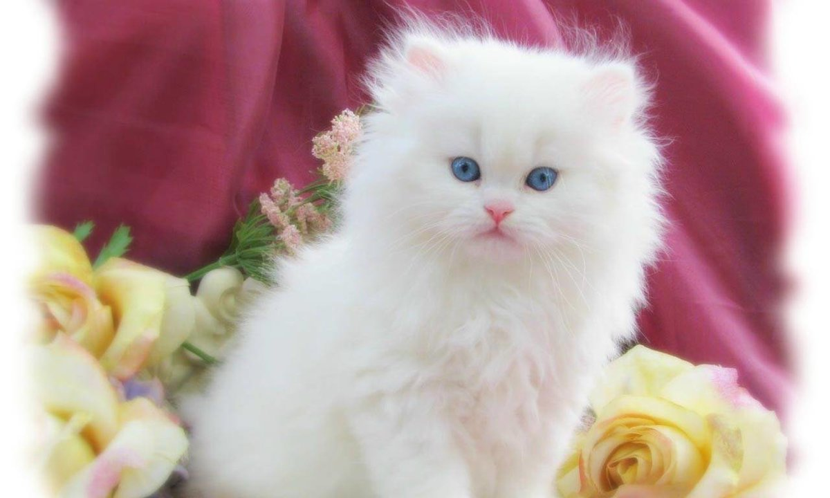 Красивая и белая киски