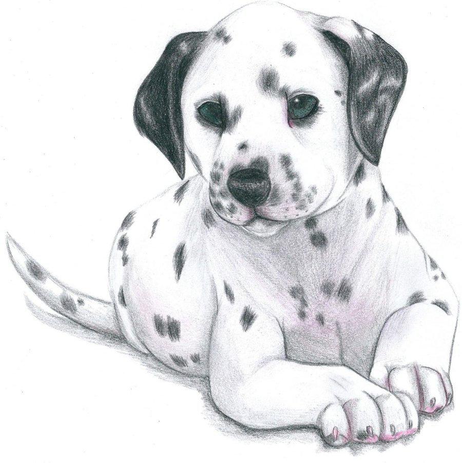 рисовать собаку в картинках
