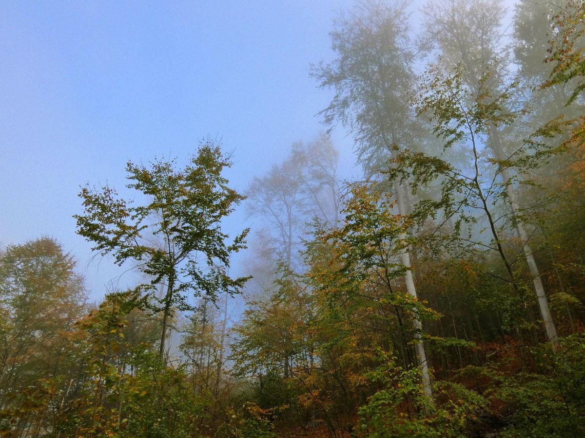 Что такое осень?Осень - туман и солнце, красочная листва деревьев ...
