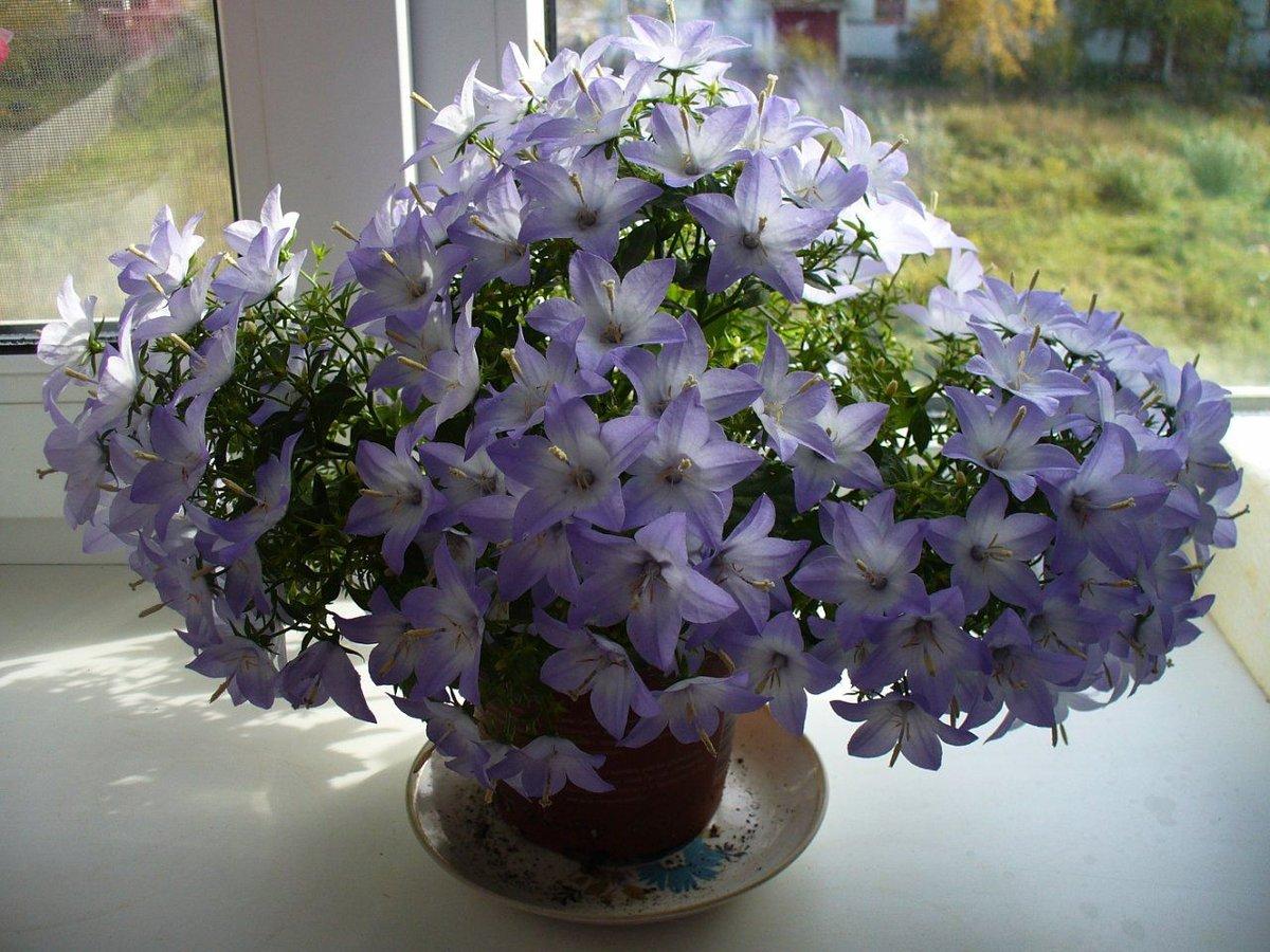 Где в челябинске купить цветок невеста жениху