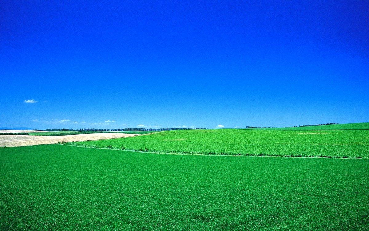 картинки с зеленым полем и словом кулаков назвал лучшего