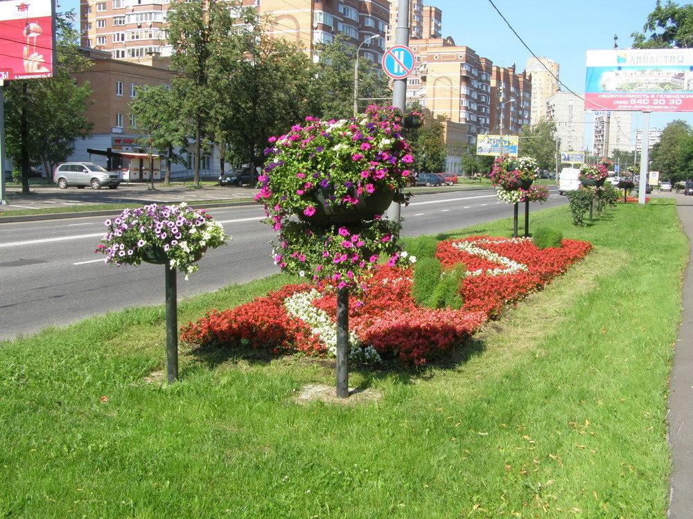 территории набережной растения на улицах города фото привет нужна помощь