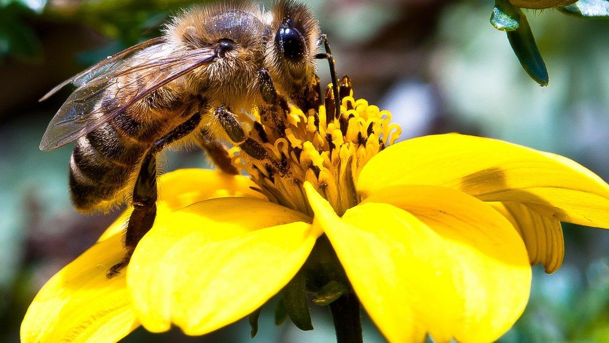 картинки пчела на цветочке фото