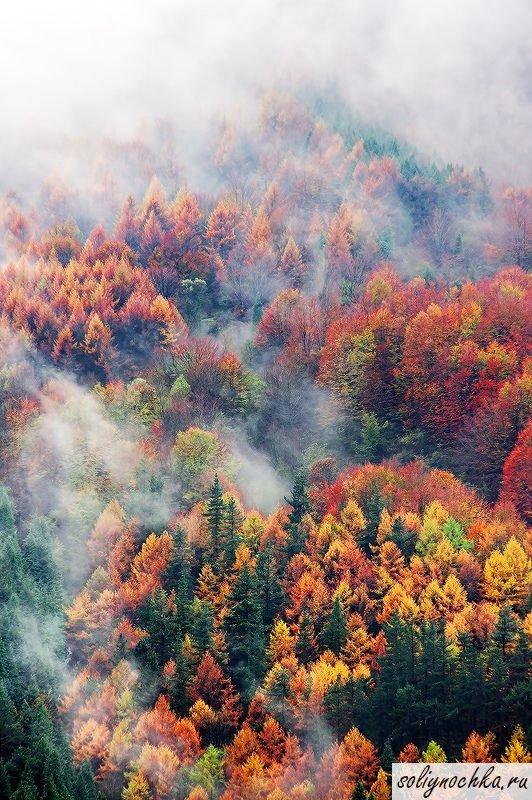 """Осенний лес с высоты птичьего полета. Фото на тему """"Осень, П"""