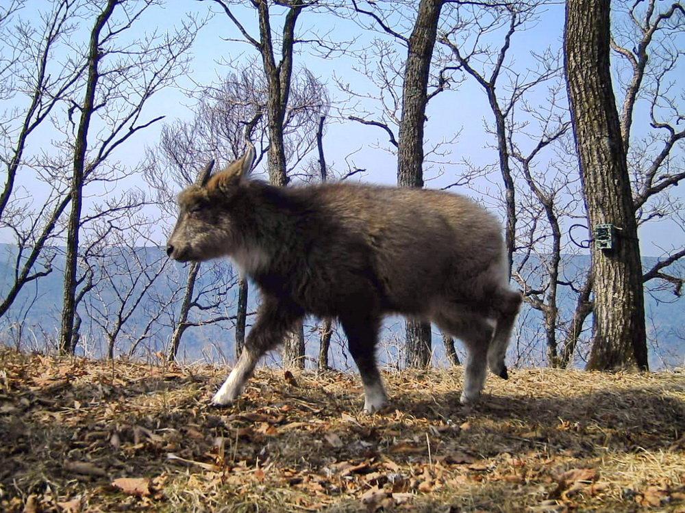 купить товар фото животных леса приморского края забудьте