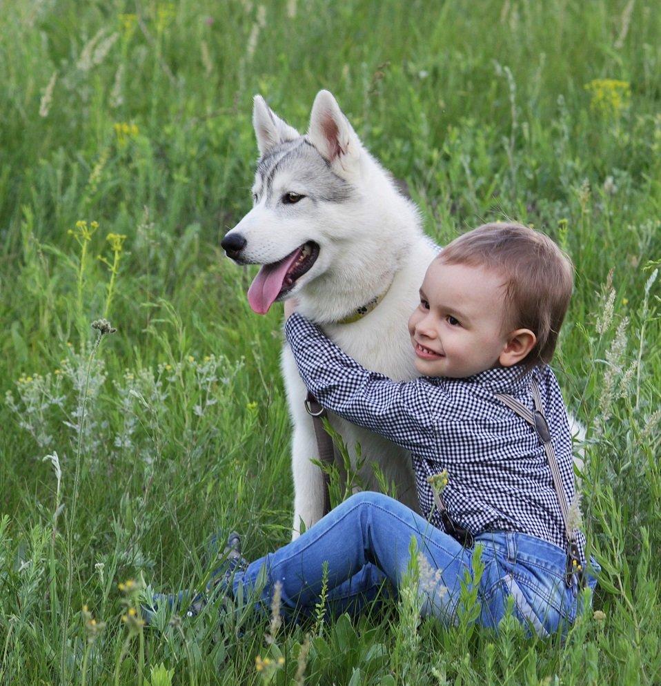 фото с щенками хаски и малышом годовалым подойдёт