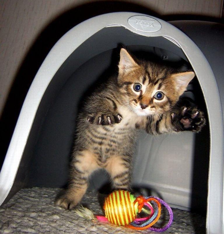 Смешные фотографии котят очень смешные, открытки