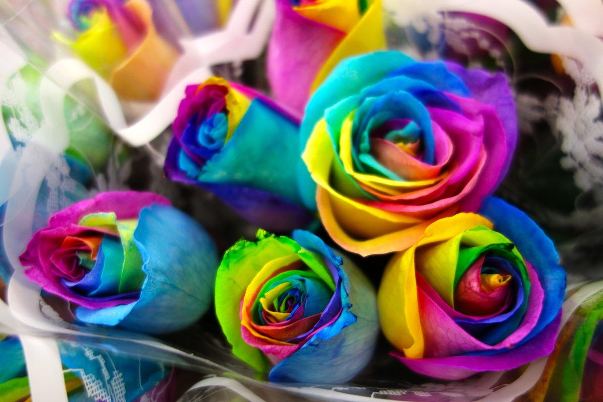 Фотки радужные розы