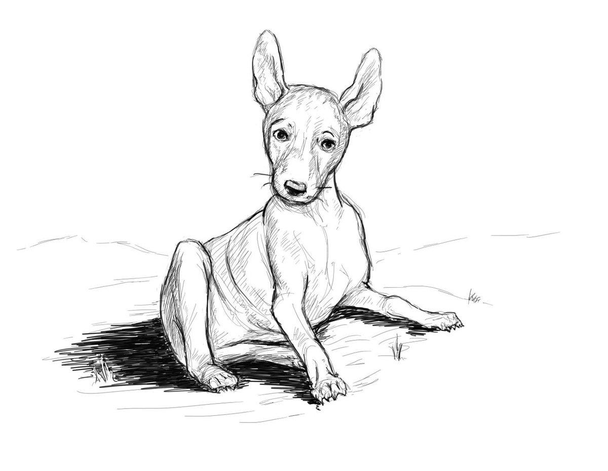 Набросок собаки картинки