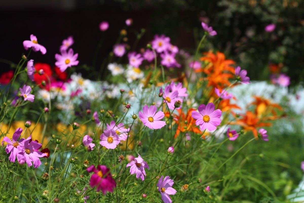 Лето цветы природа красивые картинки