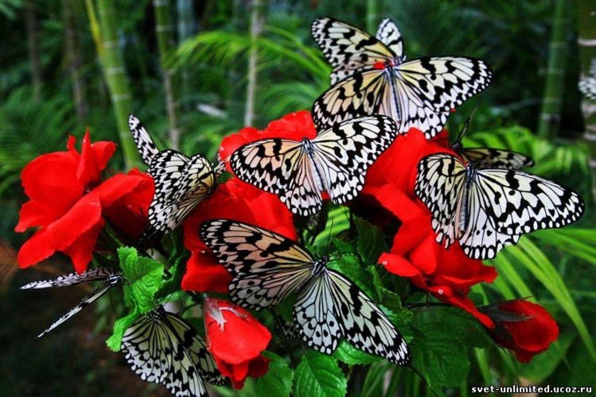 Красивые живые картинки бабочек