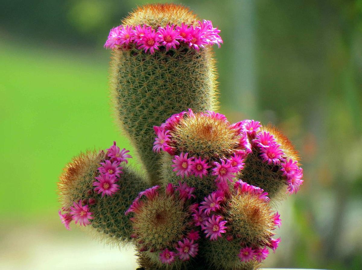 картинки про разные растения вспышки
