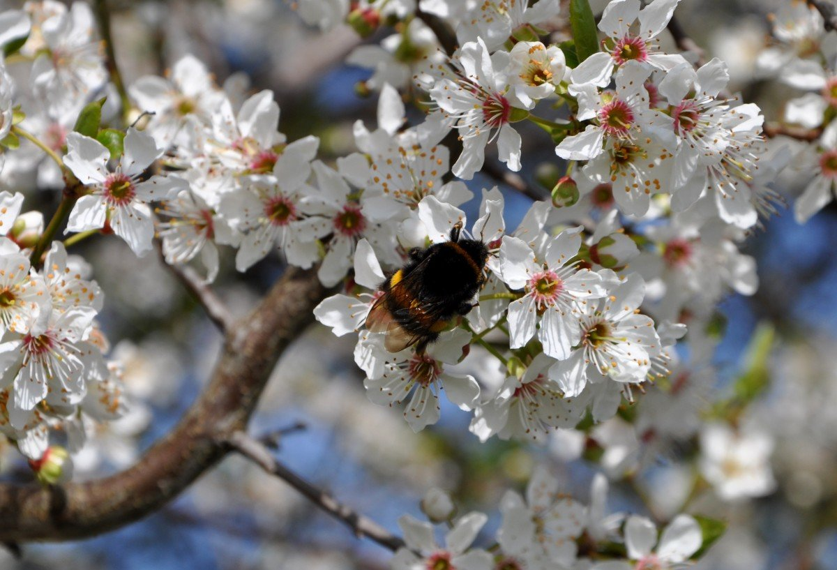 Картинки на пору року весна