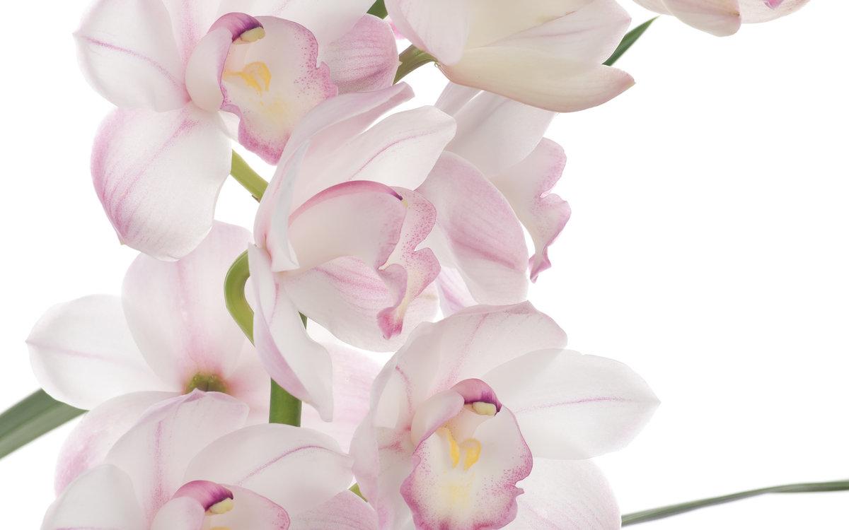 Для первоклассника, открытка орхидеи для фотошопа