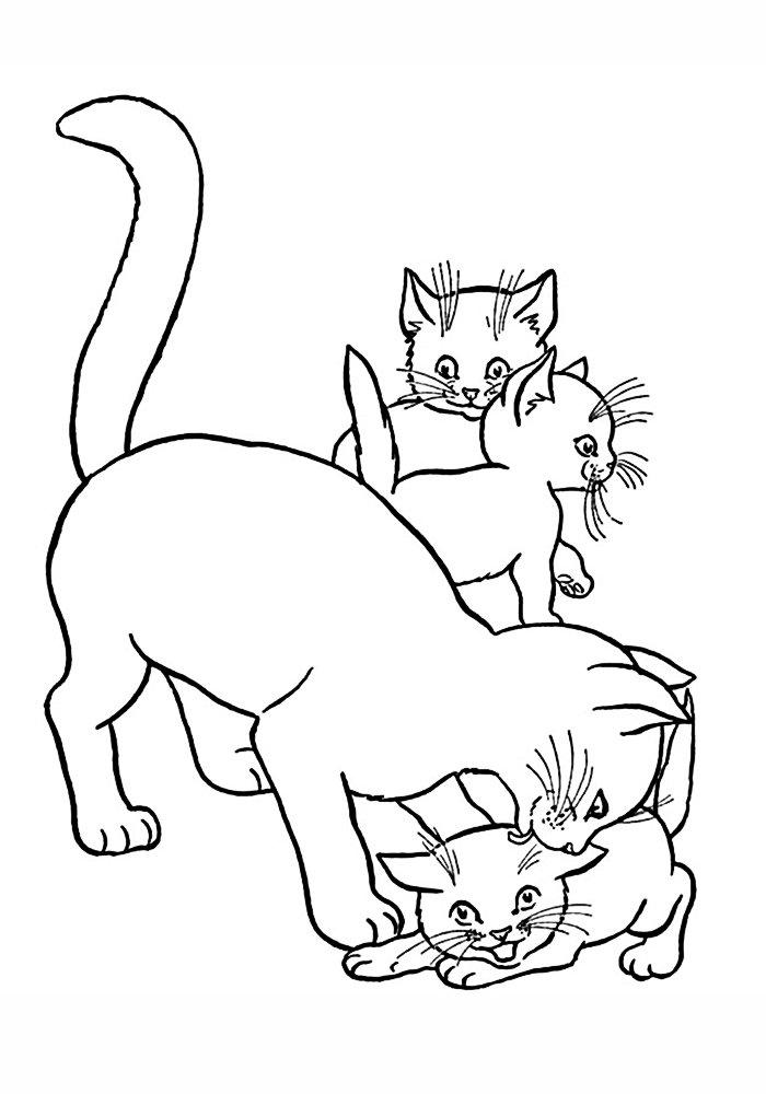 Рисунки кошек и котят, ночи