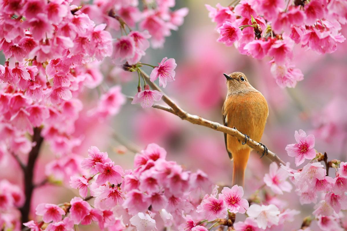 Красивые открытки весна природа