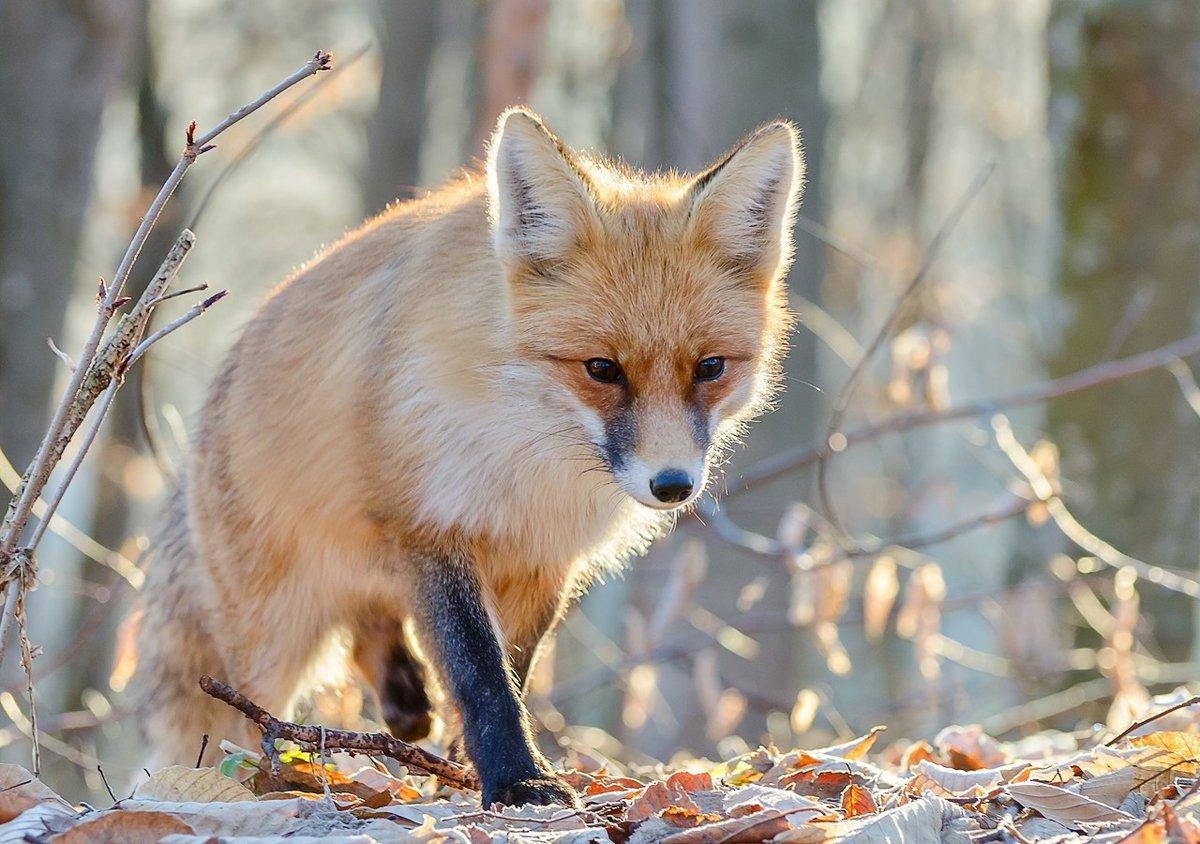 лесные животные фото и названия