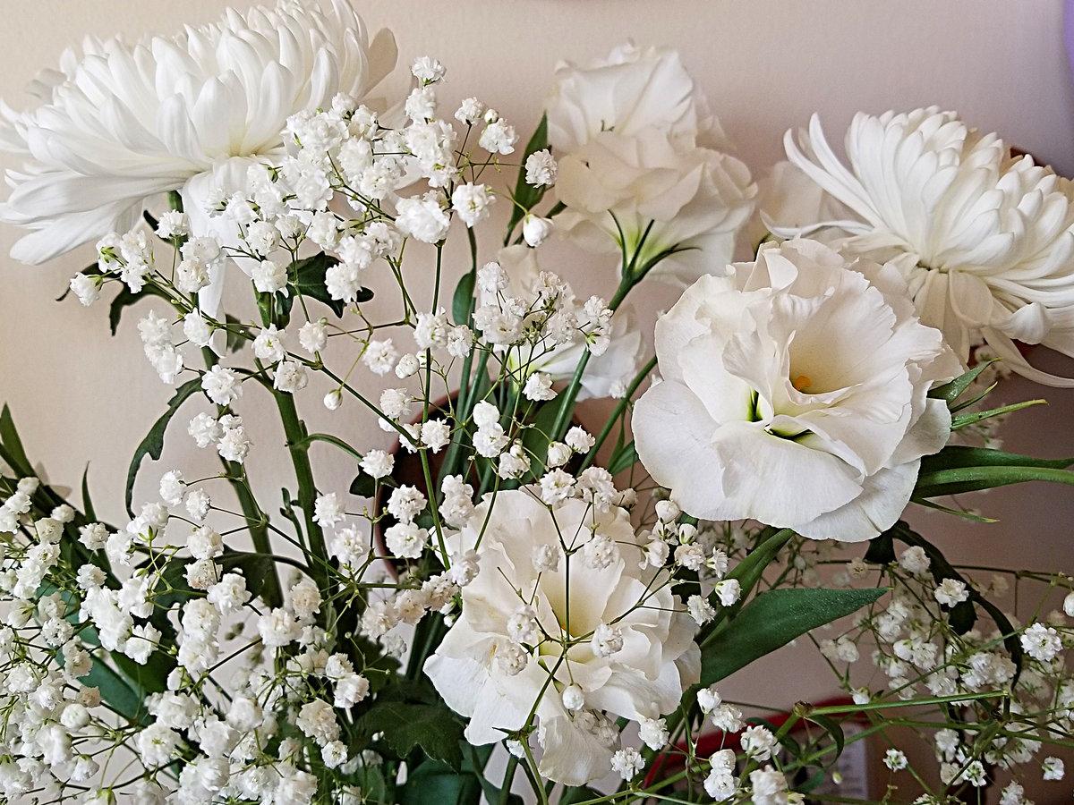 изображения, которые цветы для светланы картинки желании все можно