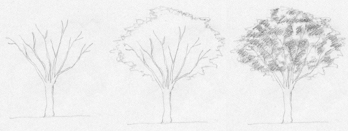 дерево картинки поэтапно для представлен список