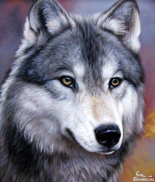 Картинки с волком и надписями для авы в контакте картинка