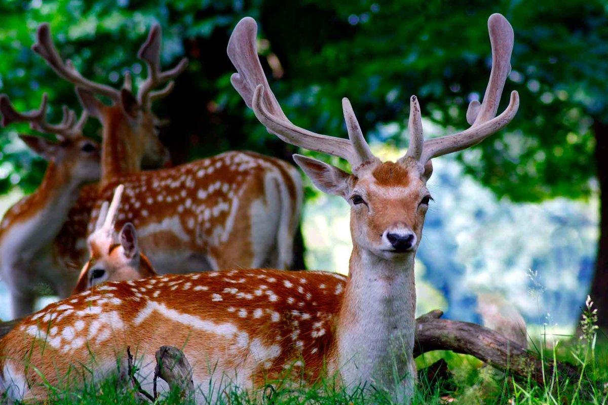 картинки животных лань жизни такие моменты