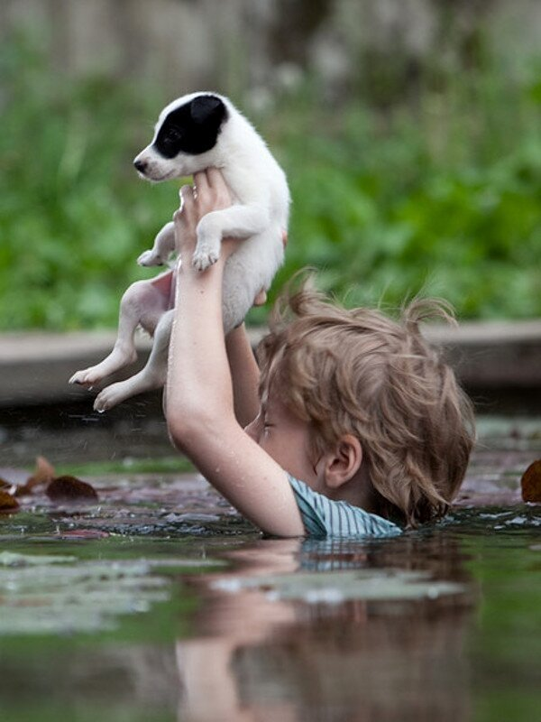 Картинки о милосердии к животным