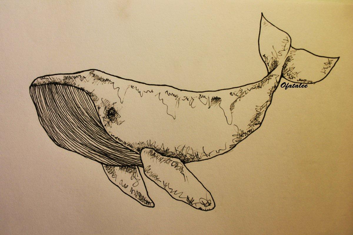 Картинки, картинки китов для срисовки с надписями